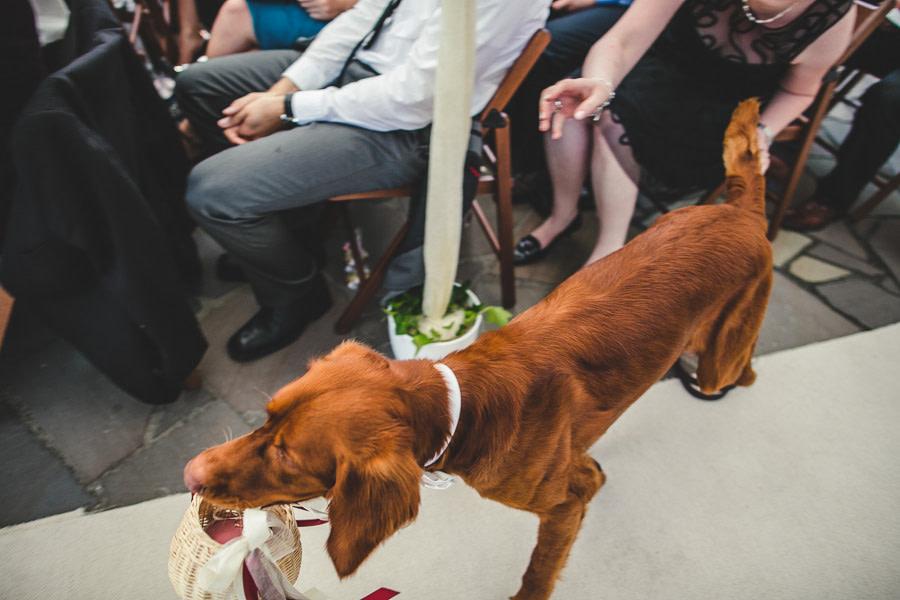 Hund bringt bei freier Zeremonie Hochzeitsringe nach vorne