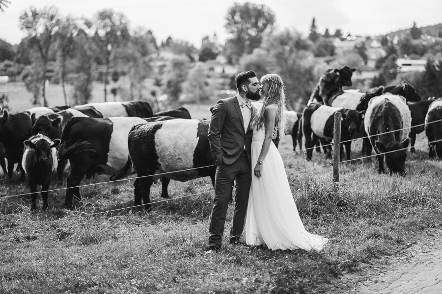 Kurioses Hochzeitsfoto Rinder machen sex hinter dem Brautpaar