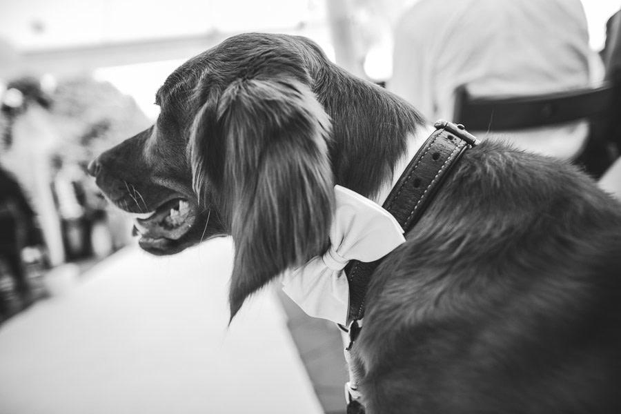 Hund vom Brautpaar auf freier Hochzeit mit Schleife